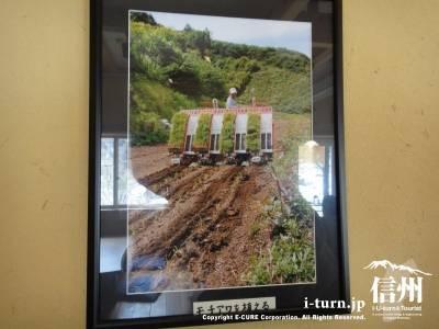 モチアワを植えている写真