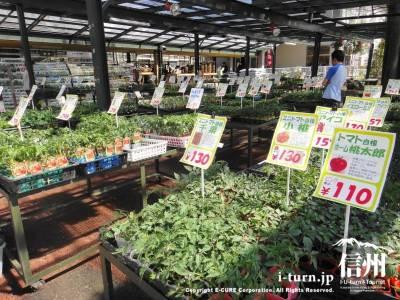 野菜の苗売り場