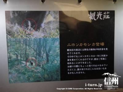 観光荘フォトギャラリー6