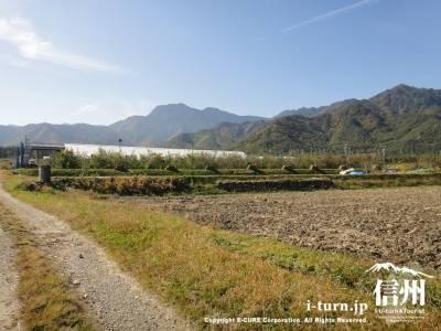 農道の先にりんご畑
