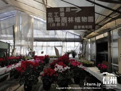 花工場 熱帯雨林植物園