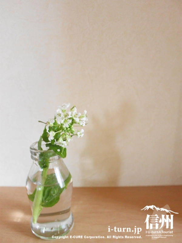 「わさびの花蒸し」作り方・レシピ~ワサビの花・葉・茎の食べ方~