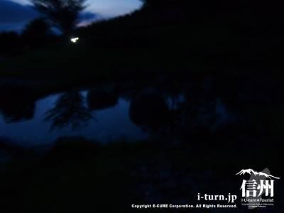 蛍がよく見れる池
