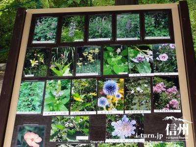 軽井沢植物園の山野草案内版