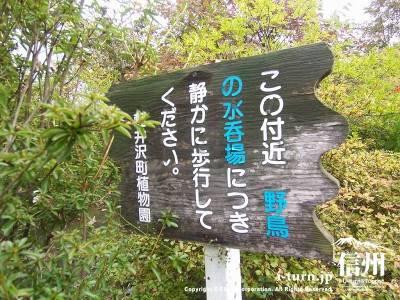 軽井沢植物園内⑦小鳥の水飲み場