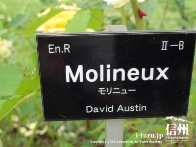 Molineux(モリニュー)