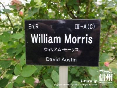 William Morris(ウイリアム・モーリスⅠ)