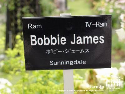 Bobbie James(ボビー・ジェームス)