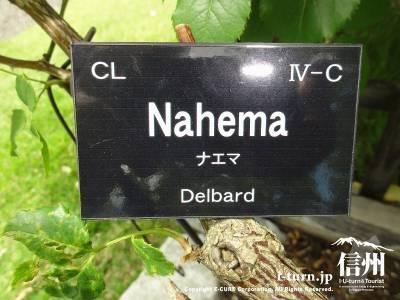 Nahema(ナエマ)