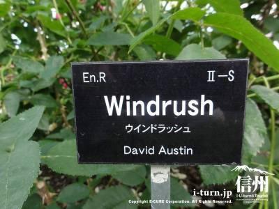 Windrush(ウインドラッシュ)