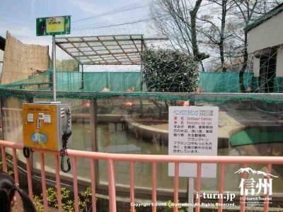 動物園定番のフラミンゴコーナー