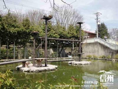 ジェフロイクモザルの下は池