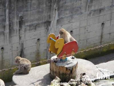 子供向けの遊具まで猿山に