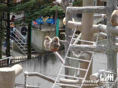 かごに乗って遊んでいる猿