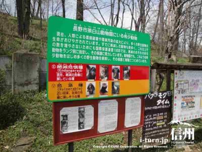 茶臼山動物園に希少動物の説明