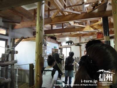 レッサーパンダのコーナーの小屋内部
