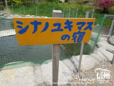 シナノユキマスの宿の看板