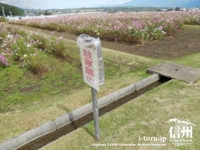 コスモス畑の沿道は駐車禁止です
