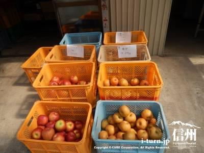 今が旬のリンゴや梨が売られています