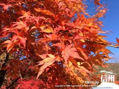 少し黄色みがかったオレンジの紅葉