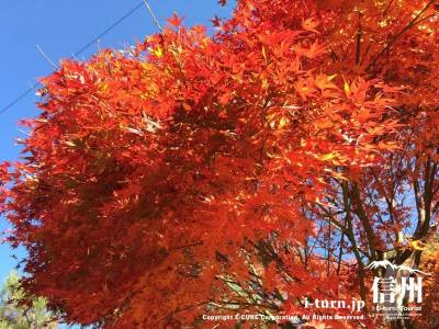 向かいながらも紅葉を堪能