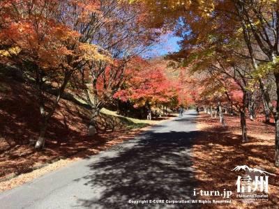 道の両側に紅葉があり紅葉並木になっています