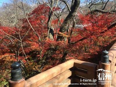 桜の季節はこんなにもみじがあるなんて気付きもしませんでした