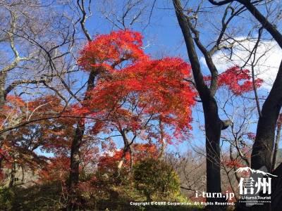 高遠城址は桜の季節だけでなく秋の季節も素晴らしいですね