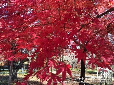自然が作り出す色とは思えないほどの発色の良さ