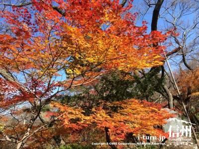 日本の四季は本当に素晴らしい