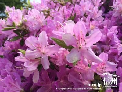 花の形も種類によって全然違います