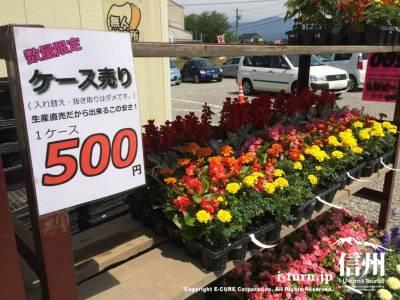 何種類か入ったケース売りで500円!
