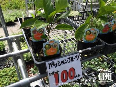 パッションフルーツも売っていましたが長野で育つのでしょうか