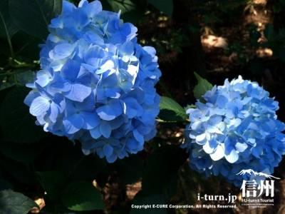 とても綺麗なブルー