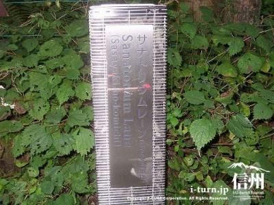 ささやきの小径|木漏れ日と小川のせせらぎの道|軽井沢町軽井沢