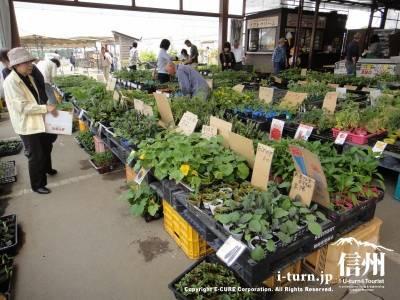 ファーマーズガーデンやまがた|畑から毎日直送の農産物直売所|東筑摩郡山形村