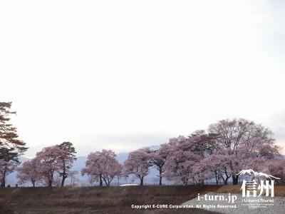六道の堤と桜|高遠公園そばにある穴場花見場所|伊那市美篶