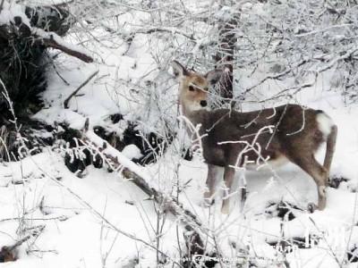 王ヶ頭ホテル|真冬の美ヶ原での宿泊は絶景|松本市入山辺