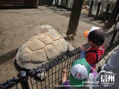 長野市茶臼山動物園【3】|触れ合う系のエリアも充実|長野市篠ノ井
