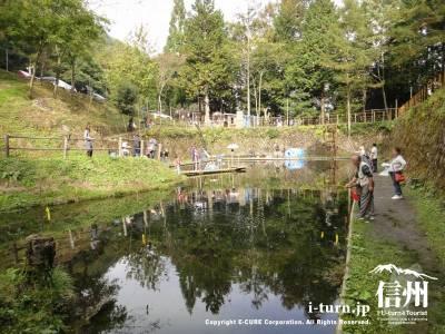 小黒川渓谷釣り堀|キャンプ場と合わせて大人気の安い釣り堀|伊那市荒井