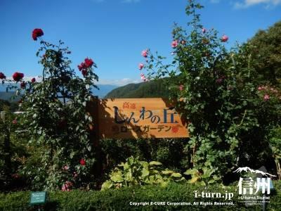 しんわの丘ローズガーデン|秋バラを楽しむ|伊那市高遠