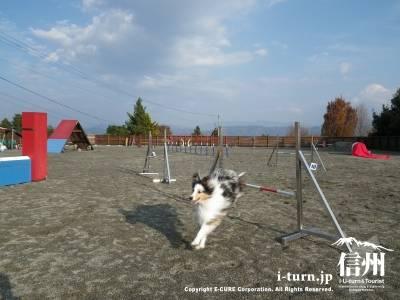 安曇野ガーデン アジリティフィールド|愛犬と絆を深めるトレーニング施設|安曇野市穂高牧