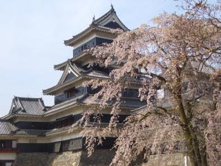 松本市内の桜の開花情報・イベント【2012】