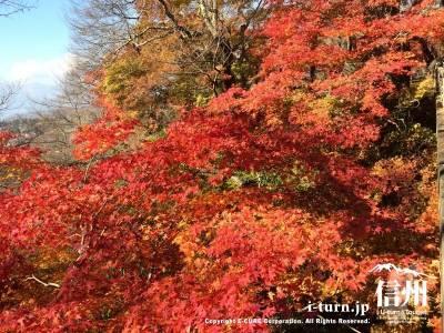 高遠城址公園の紅葉|2014年11月7日撮影|伊那市高遠