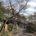 高遠城の桜|これから満開寸前の公園|伊那市高遠