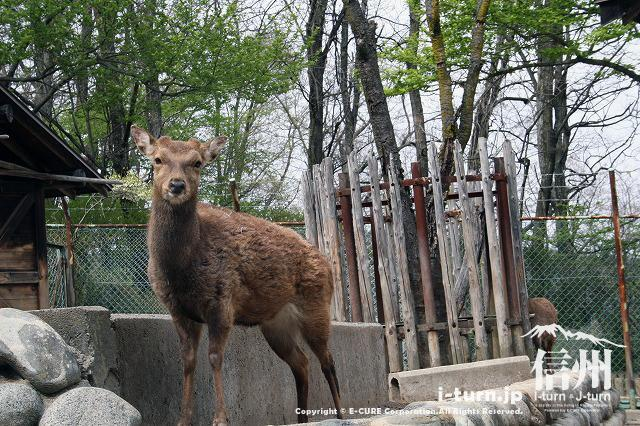 アルプス公園の動物園|猿ヤギア...