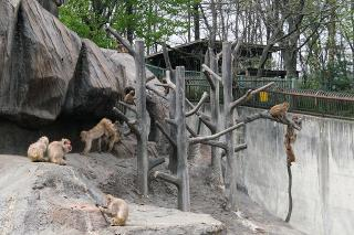 木を登る猿