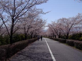 桜咲くスカイパーク