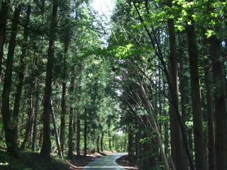 青木湖湖畔道路