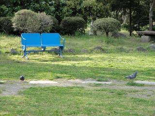 青いベンチとハト